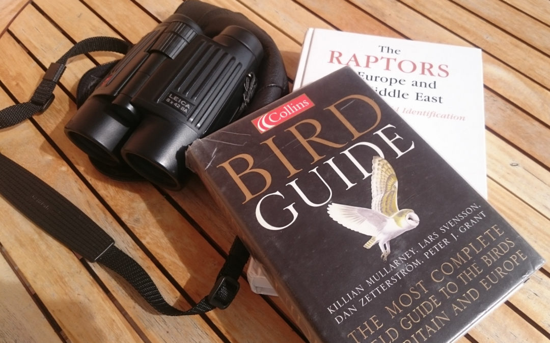 Call for tender: monitoring of raptors in Sicily