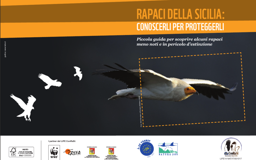 Learn about some key birds of prey living in Sicily: new booklet