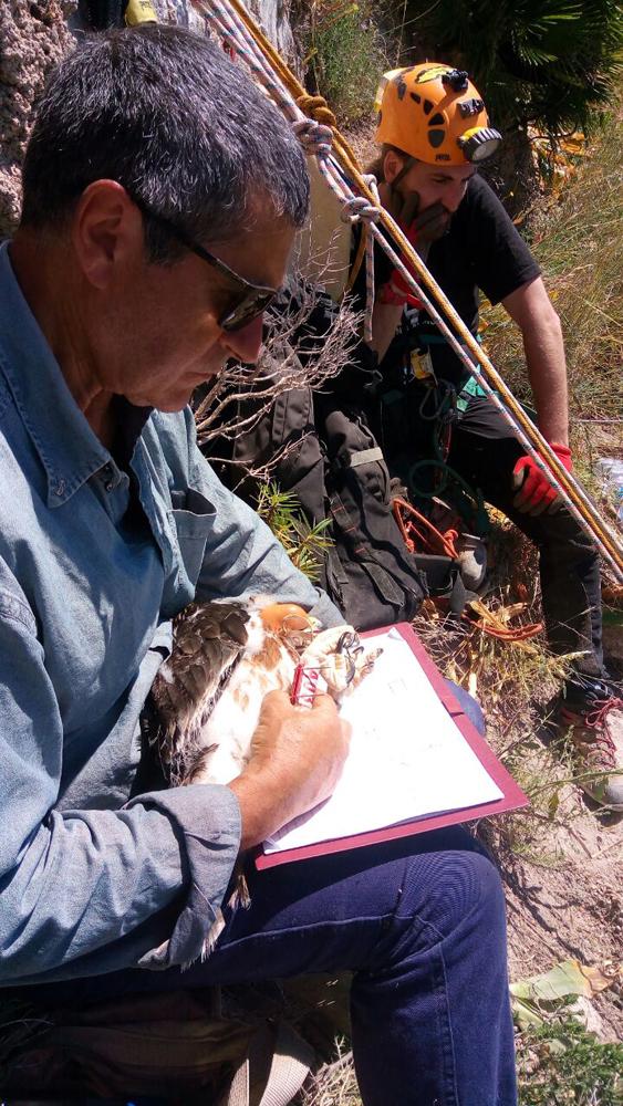Measuring the birds (photo Lo Valvo)
