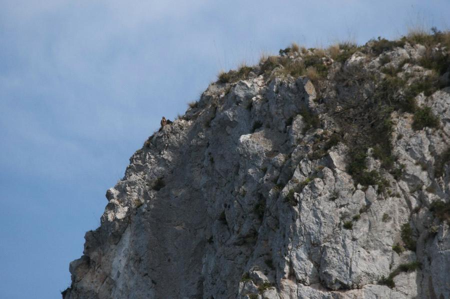 Un'aquila sulla sommità di una parete (foto Di Trapani)
