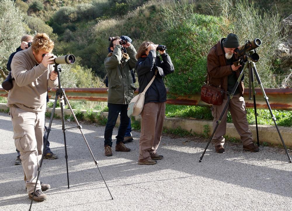 Osservazione di un sito di nidificazione di Aquila di Bonelli (foto Pollutri)