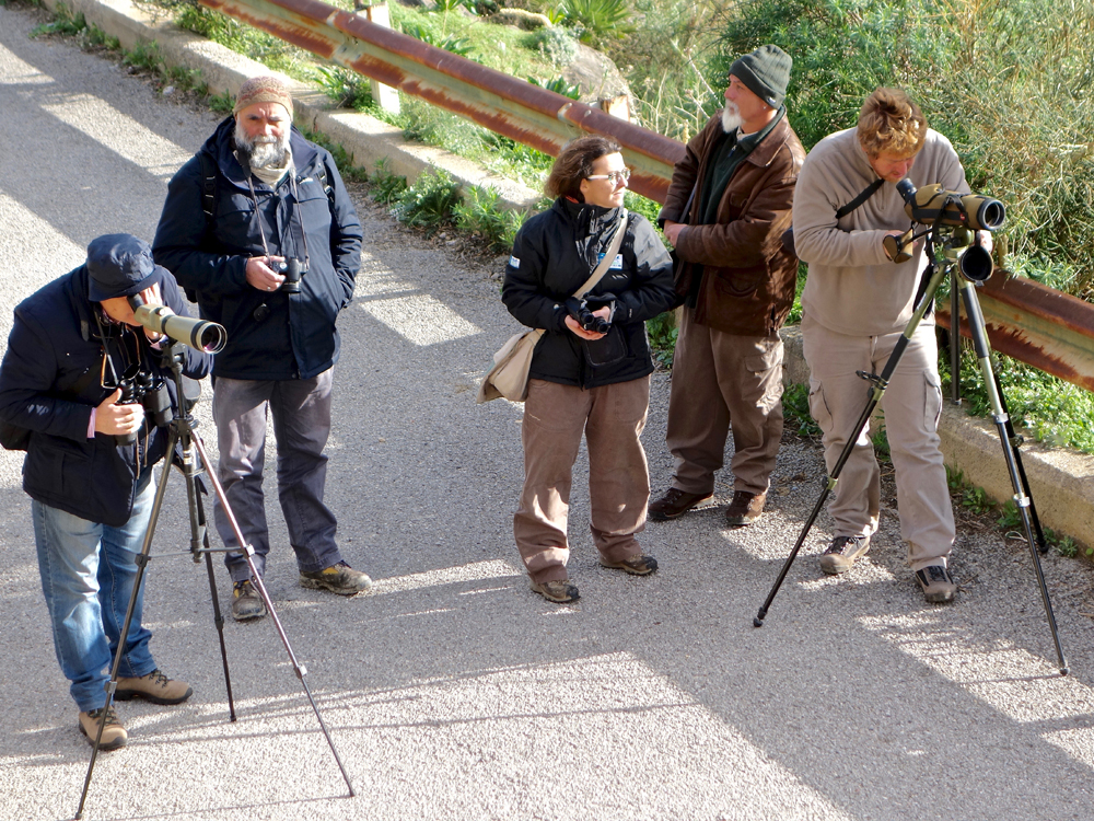 Observing an Eagle nesting site (photo Pollutri)