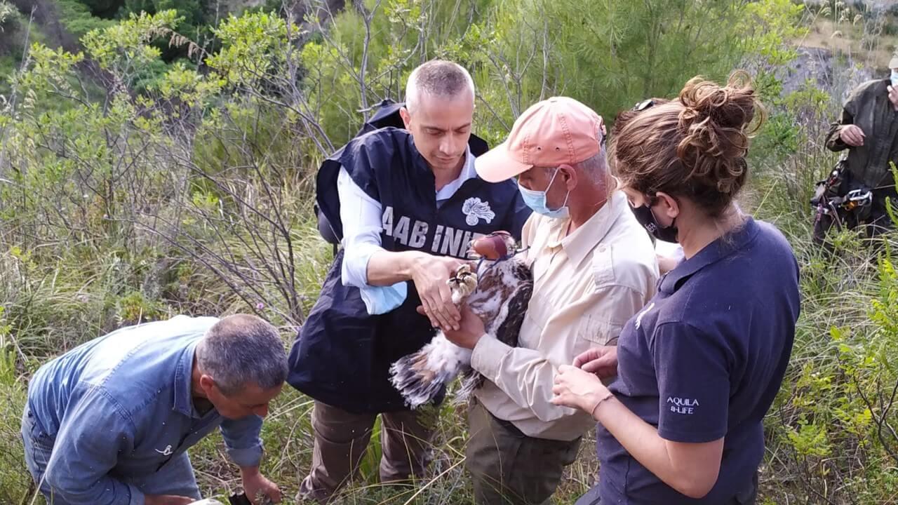 Carabinieri forestali ed equipe del progetto LIFE durante l'operazione di marcatura (foto Pollutri)