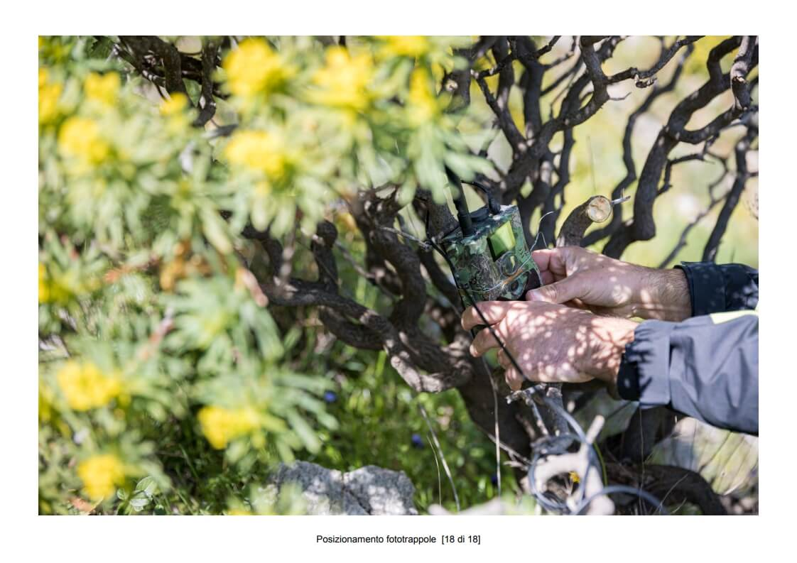 Positioning of camera traps - 18 of 18 (photo: Mathia Coco)