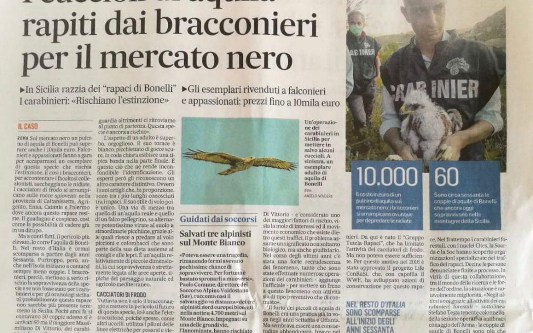 L'aquila di Bonelli sul Messaggero!